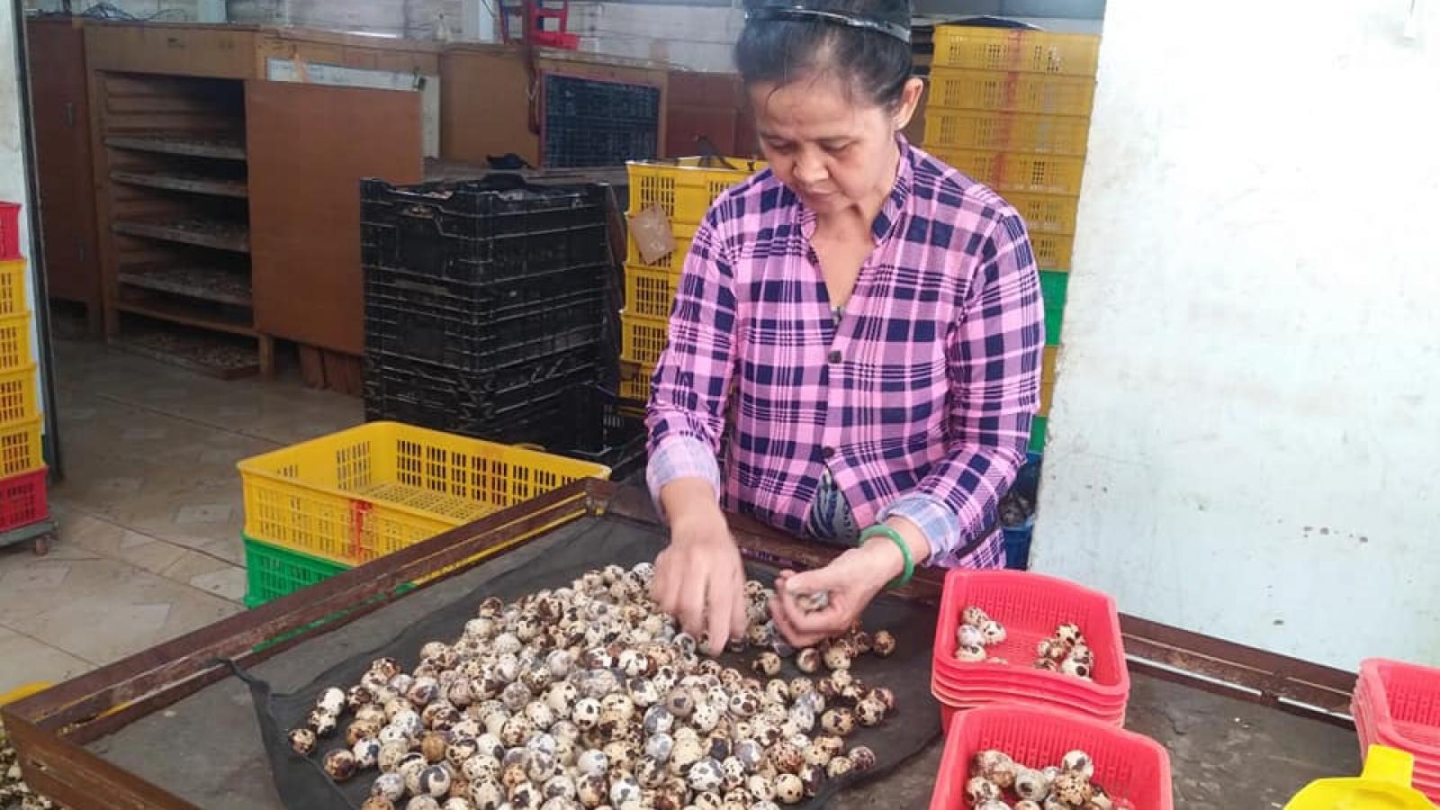 Nông dân Tiền Giang tồn đọng hơn 1 triệu quả trứng chim cút có nguy cơ đổ bỏ