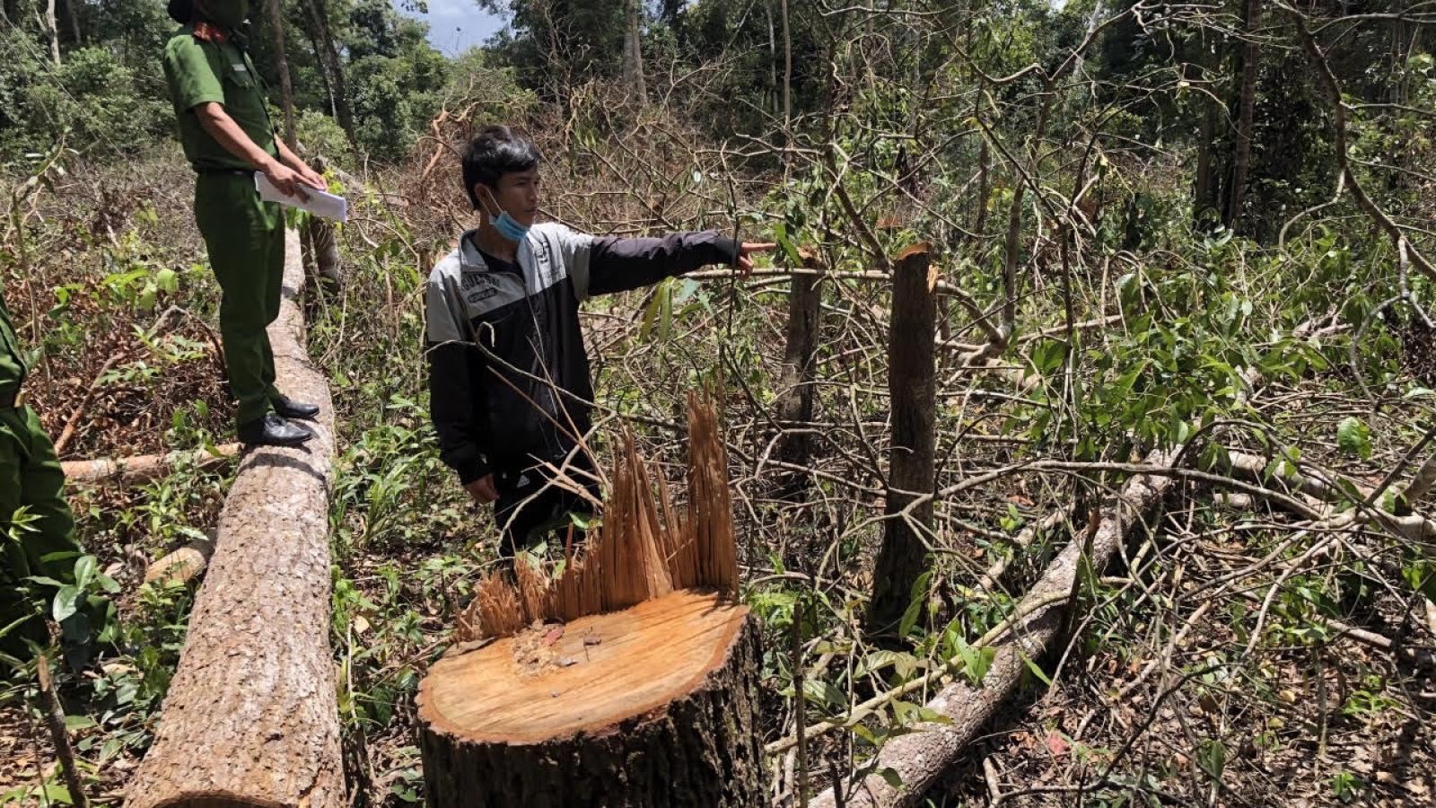Khởi tố 7 đối tượng phá hơn 1,2 ha rừng ở Đắk Nông