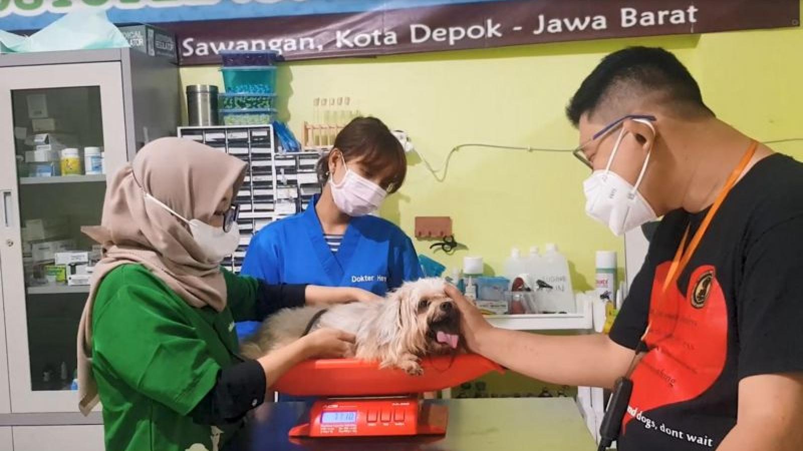 Câu chuyện của người Indonesia cứu hộ vật nuôi mắc COVID-19 miễn phí