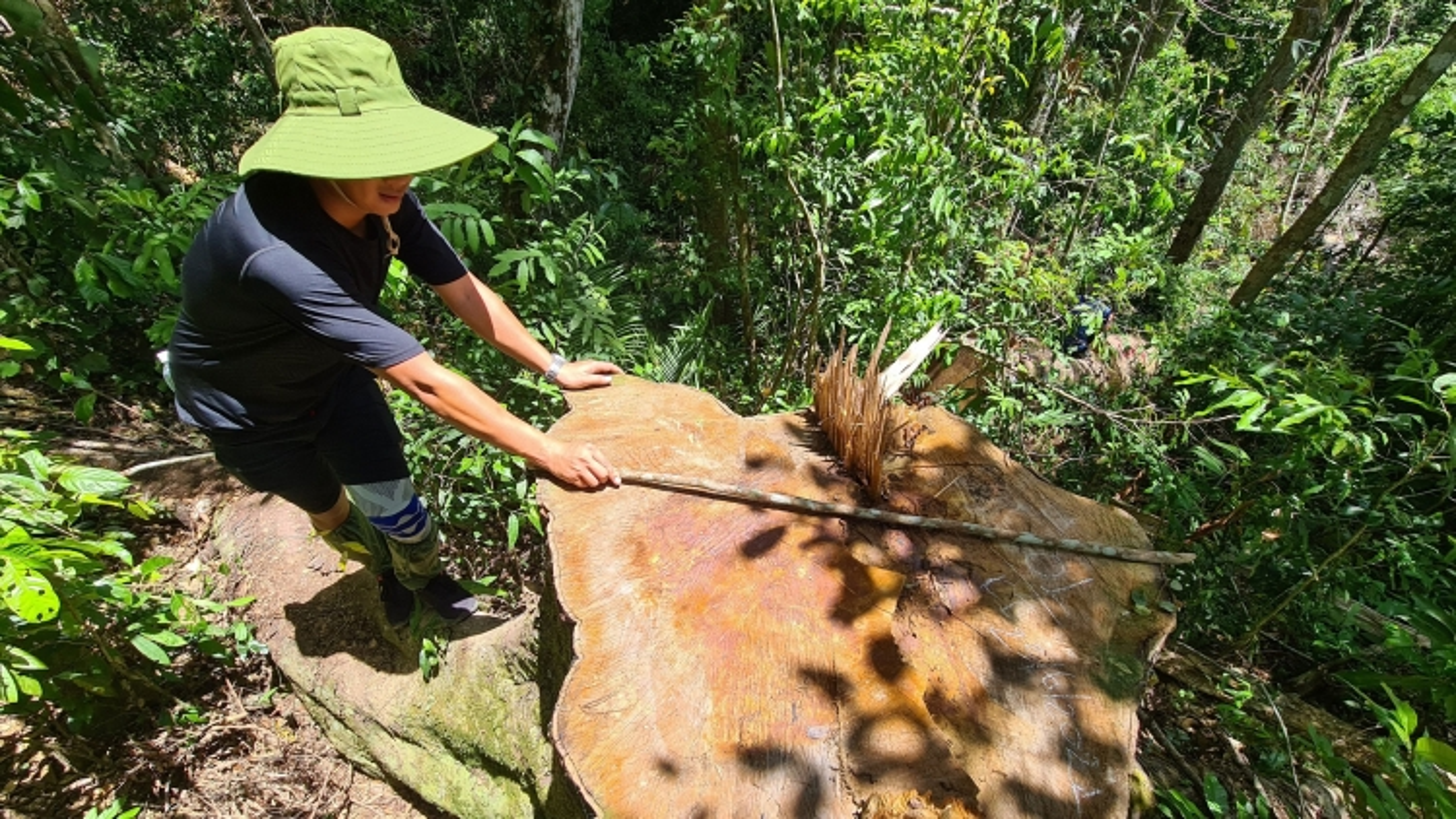 Sửa nghị quyết về quy hoạch rừng - vấn đề lớn tại Kỳ họp HĐND tỉnh Gia Lai