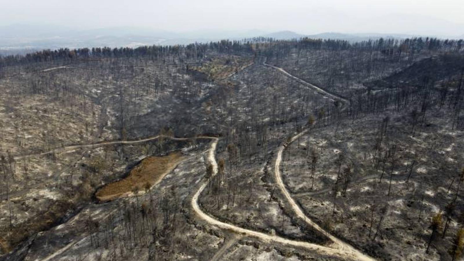 Cháy rừng Hy Lạp: Thảm họa sinh thái lớn nhất trong nhiều thập kỷ