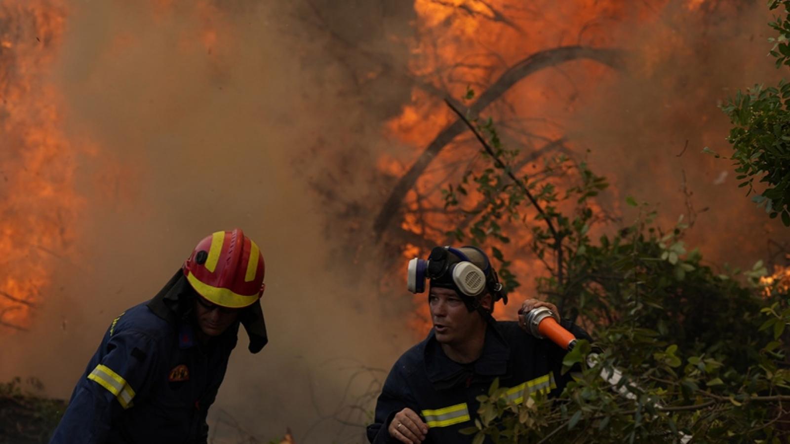 Thủ tướng Hy Lạp xin lỗi người dân vì xử lý chậm trễ thảm họa cháy rừng