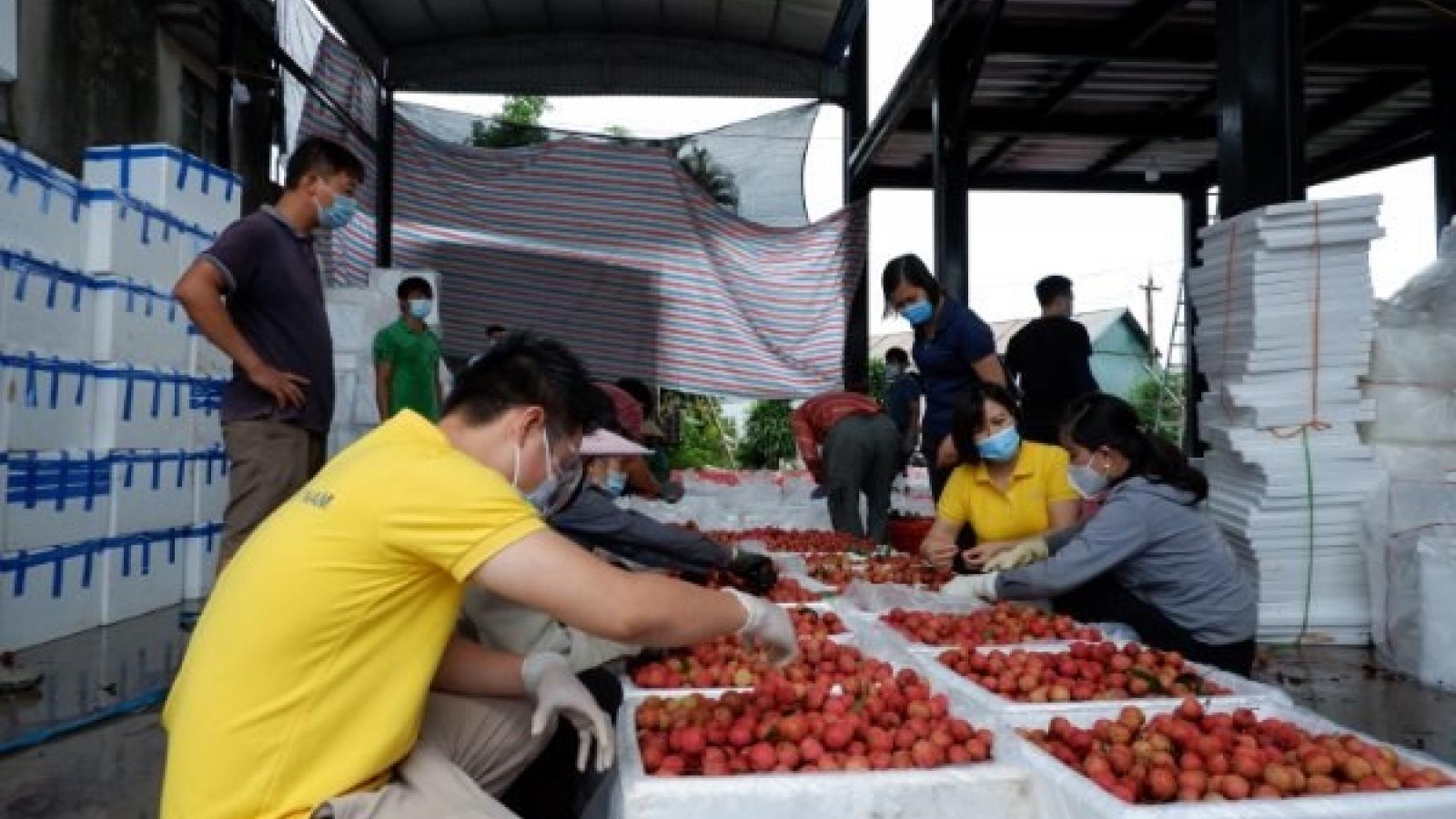 Vietnam aims to connect 5 million farming households to e-commerce platforms