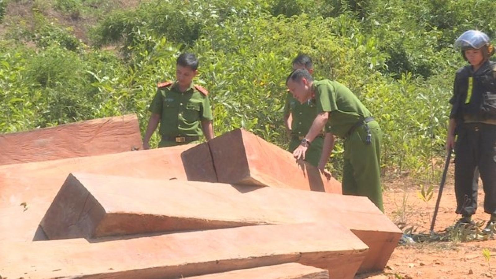 Truy tố 9 cựu lãnh đạo, nhân viên Công ty lâm nghiệp để mất rừng