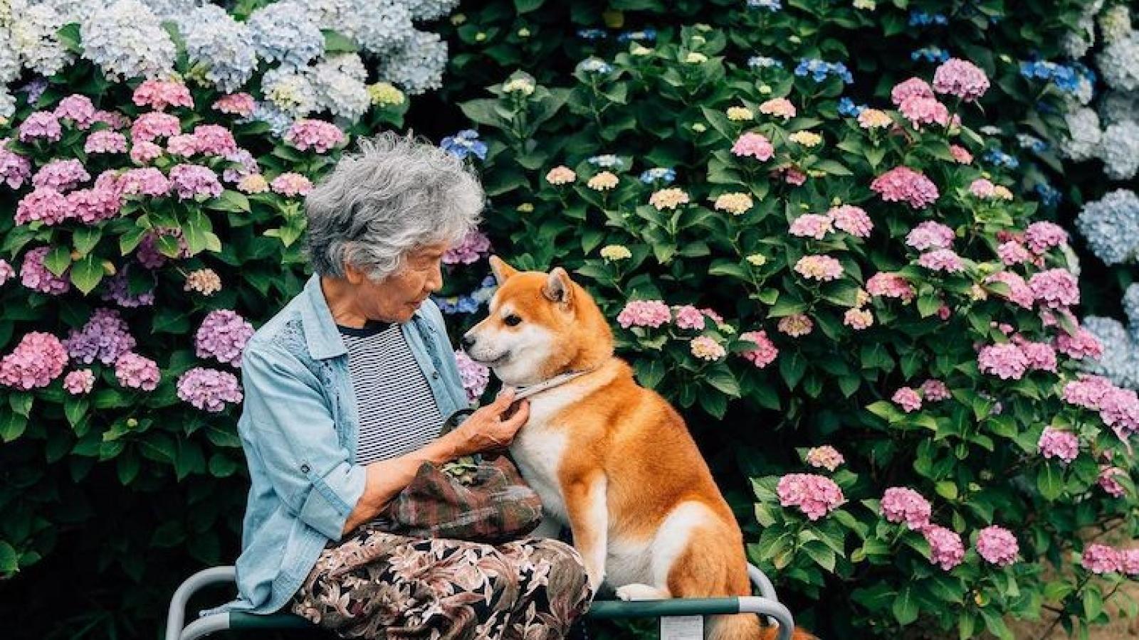 Bộ ảnh đẹp đến nao lòng về người bà và chú chó cưng