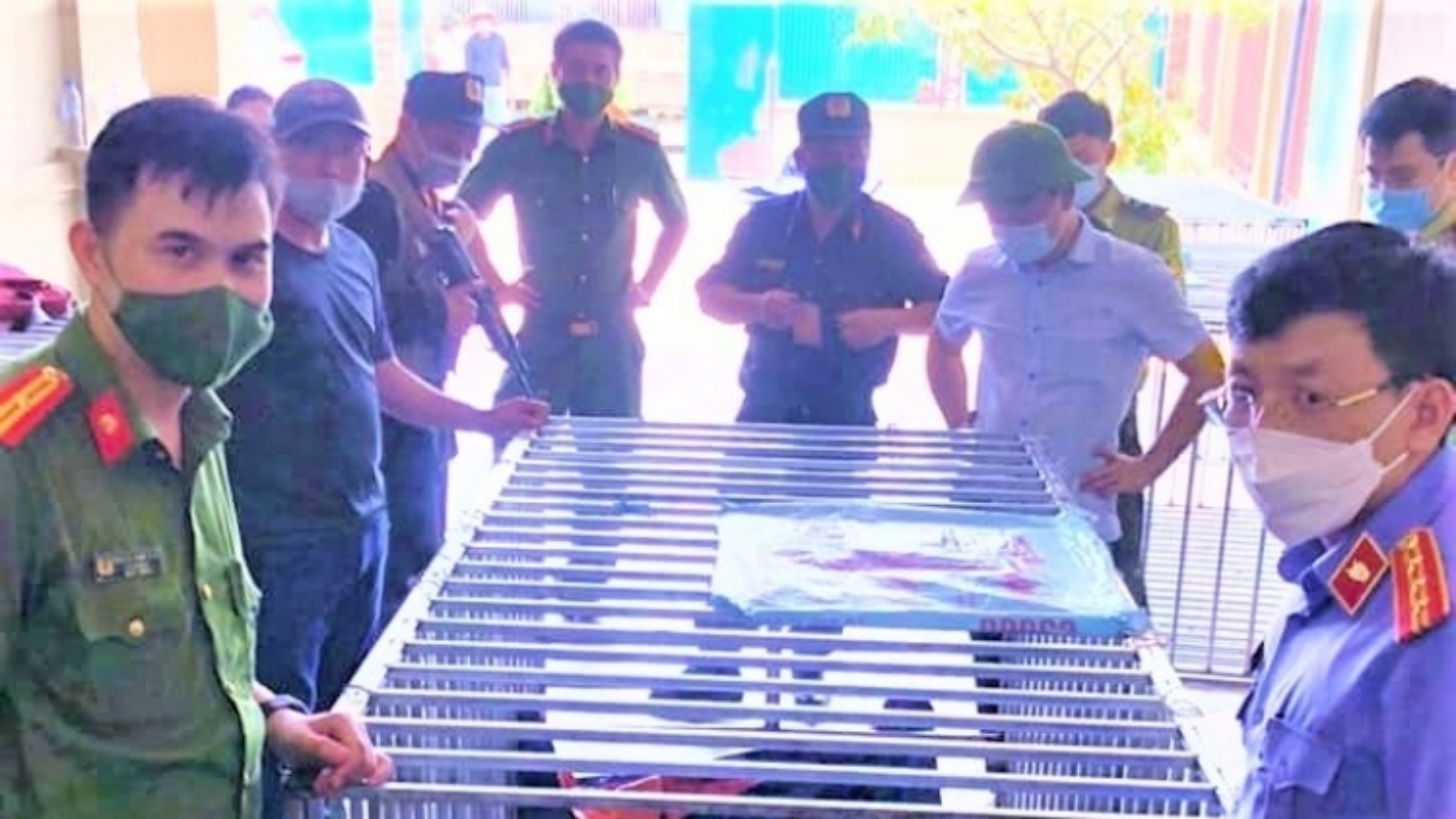 17 con hổ nuôi nhốt trái phép trong nhà dân: Khởi tố, bắt tạm giam bị can