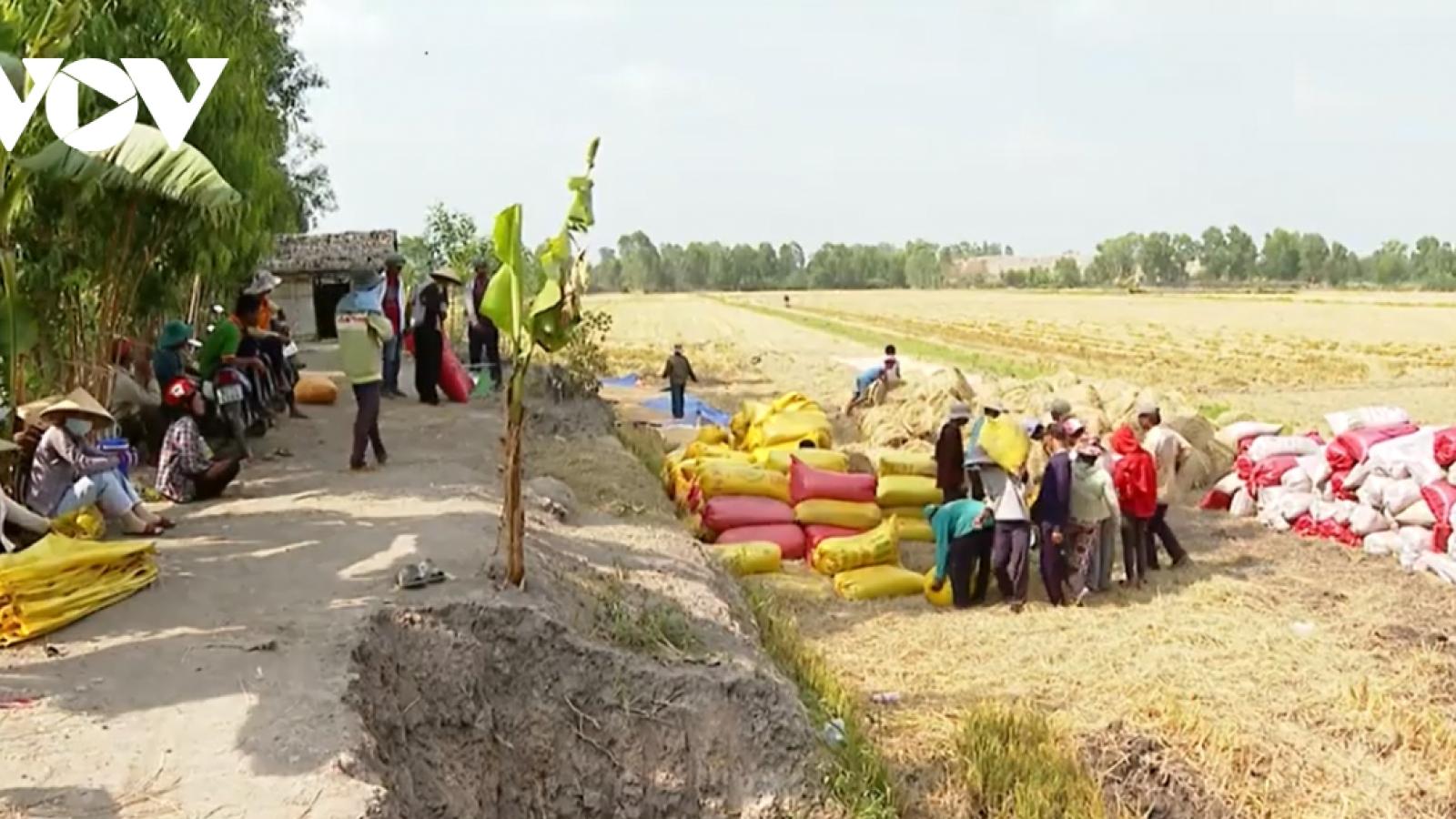 Tạo thuận lợi về nguồn vốn cho thu mua thóc, gạo khu vực ĐBSCL