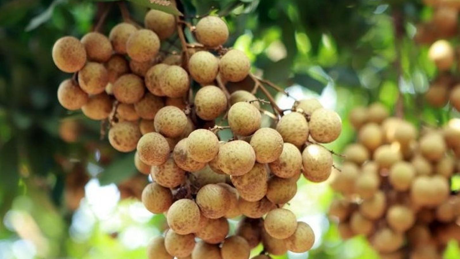 Vietnamese longans now available for sale on e-commerce platform