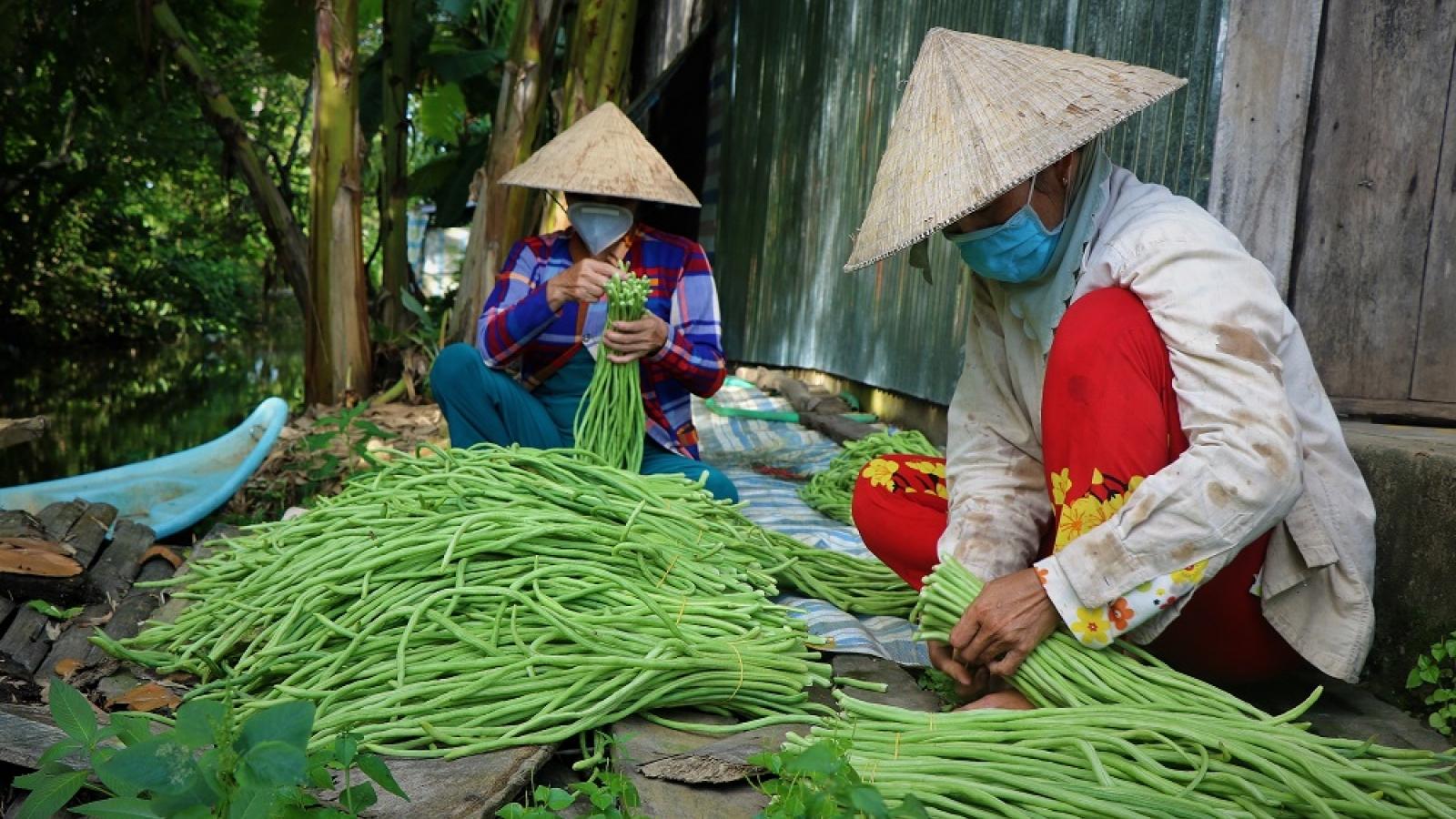 Đoàn viên, thanh niên mở gian hàng bán hàng chục tấn nông sản giúp nông dân