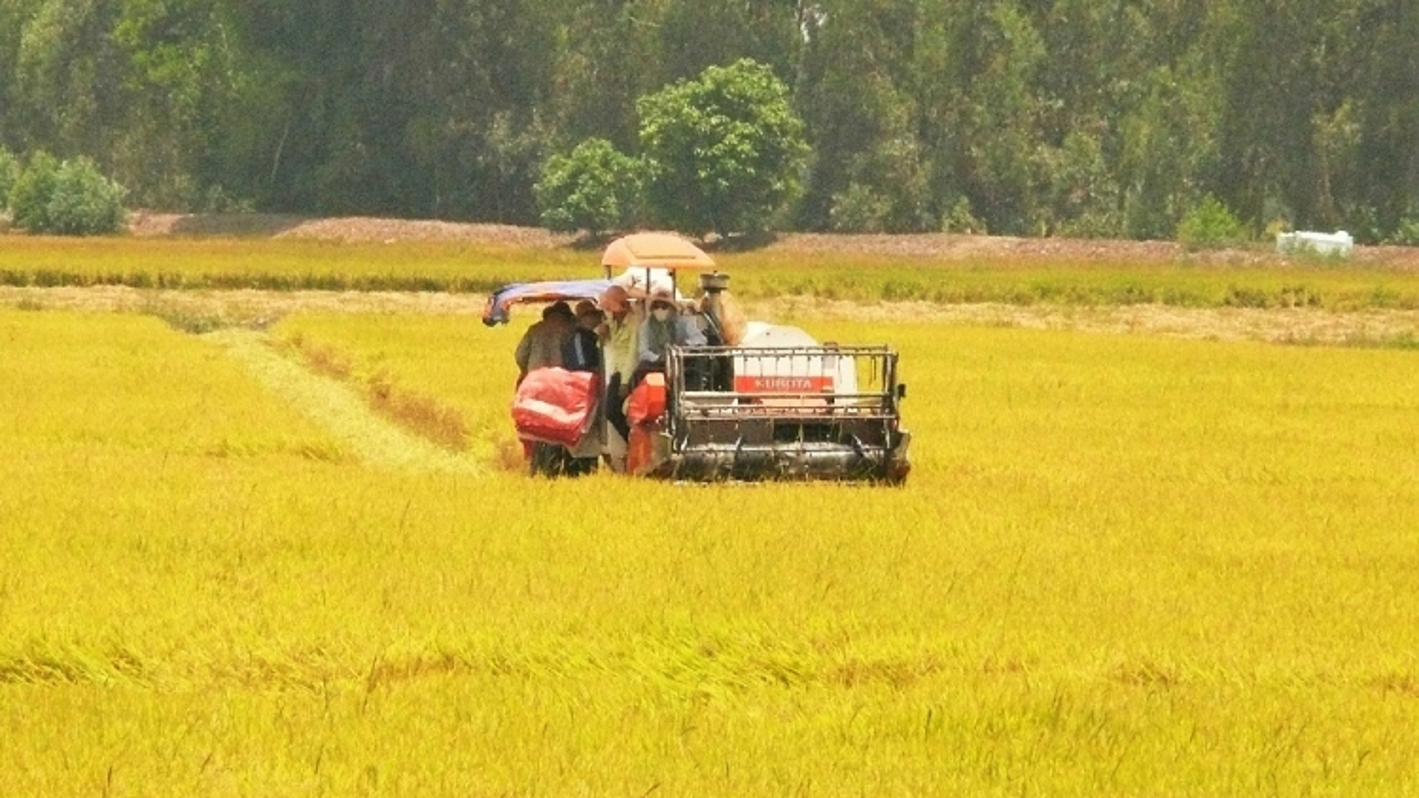 An Giang tháo gỡ khó khăn, kết nối hỗ trợ nông dân tiêu thụ lúa