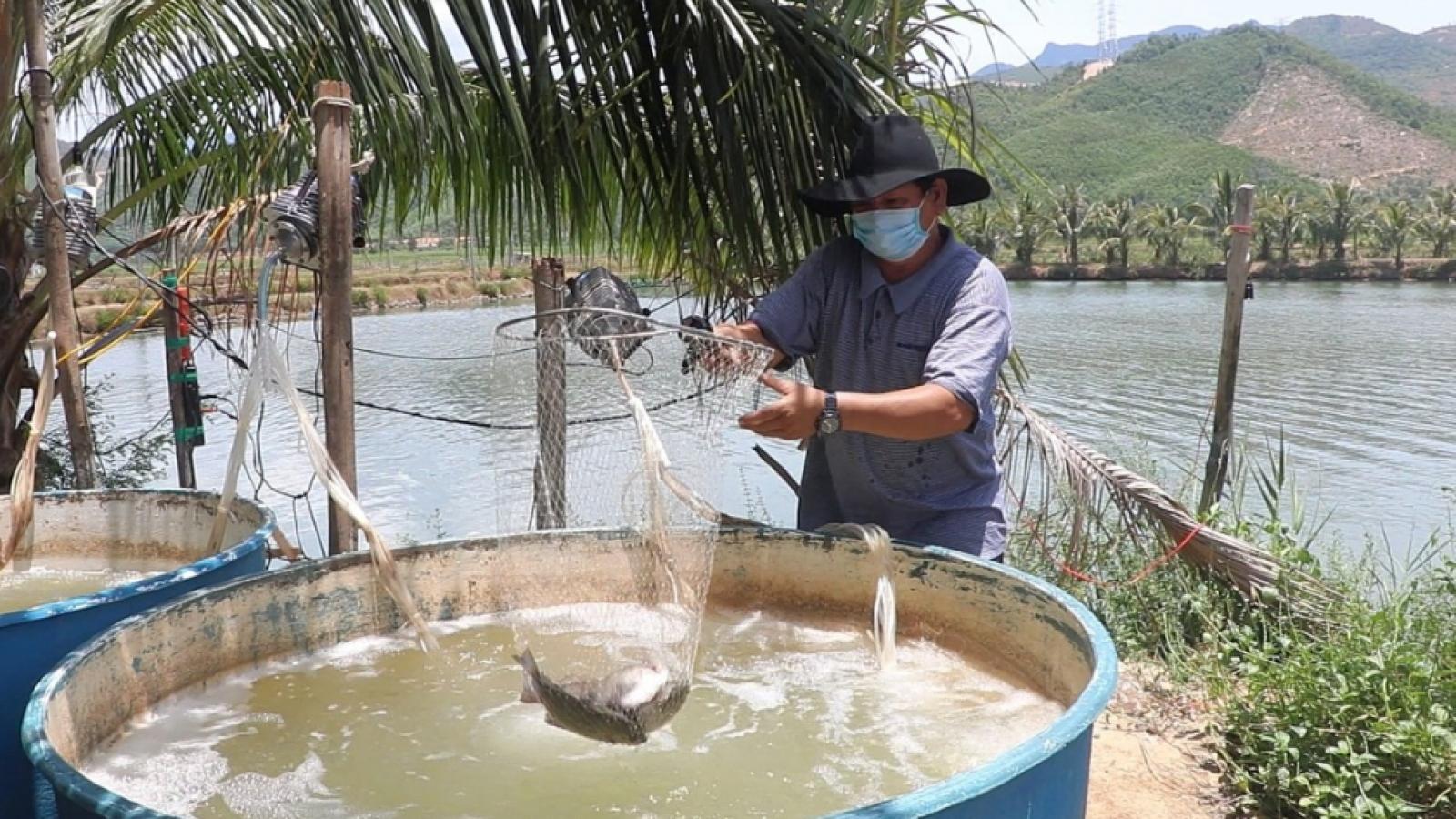 Đà Nẵng hỗ trợ tiêu thụ nông sản cho người dân