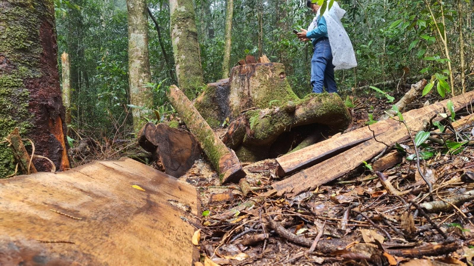 Khởi tố 14 nghi phạm, tạm giam 6 bị can vụ phá rừng ở Lâm Đồng