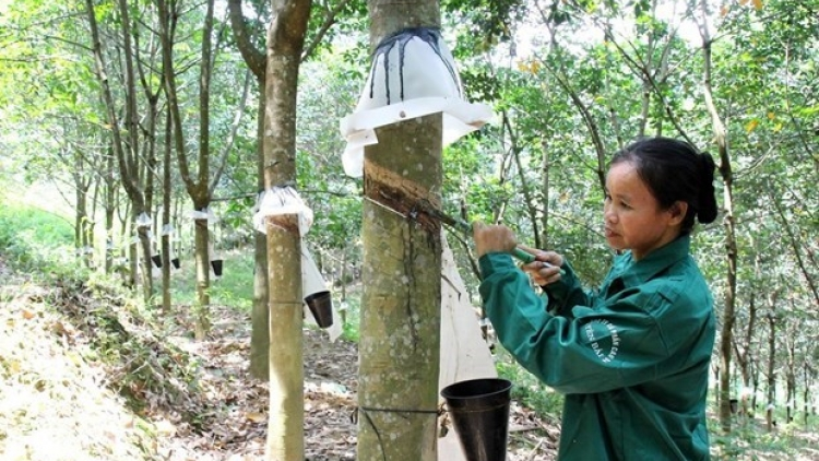 Rubber exports enjoy growth during January-July