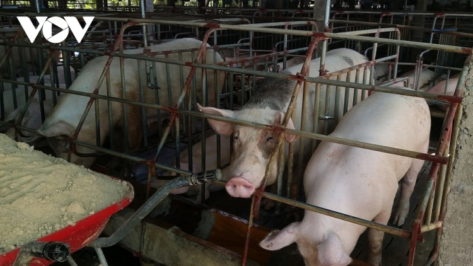 Việt Nam mỗi năm cần từ 28 - 30 triệu tấn nguyên liệu thức ăn chăn nuôi
