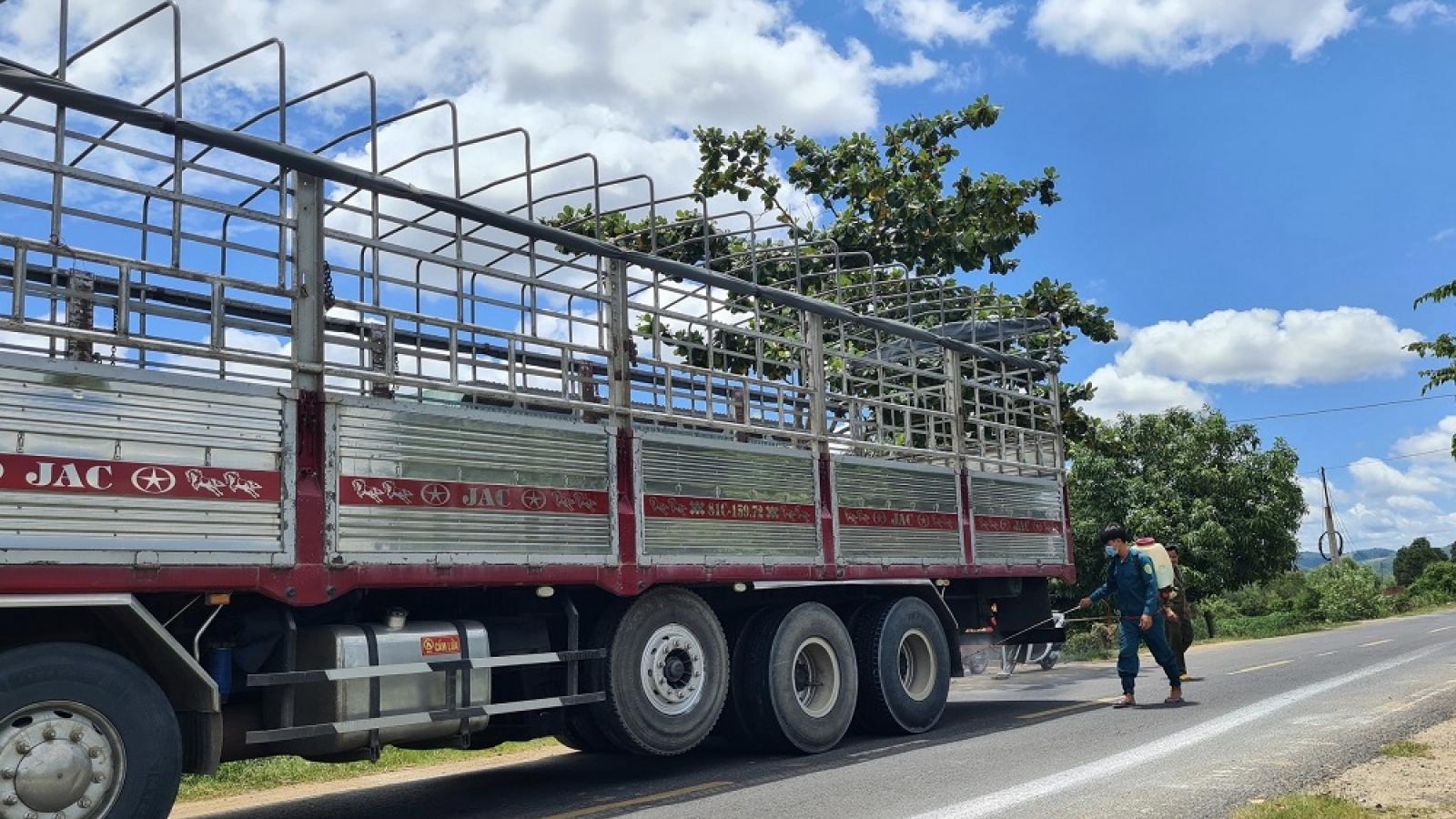 Gia Lai khẩn trương dập dịch tả lợn Châu Phi, ngăn chặn nguy cơ dịch kép trên đàn gia súc