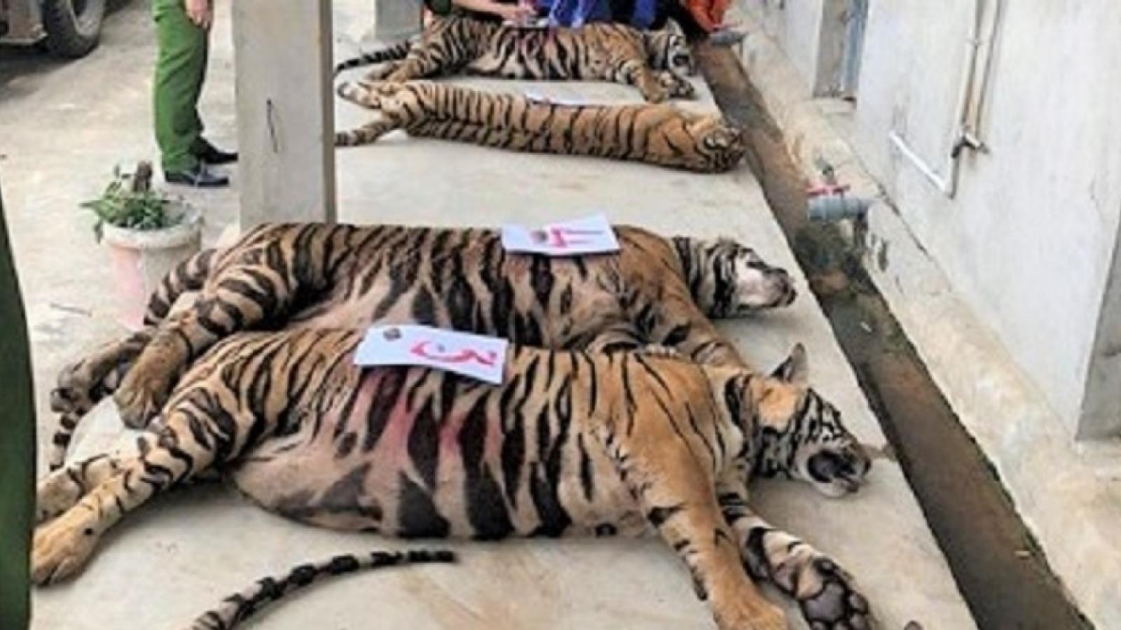 Vụ buôn bán nuôi nhốt hổ trái phép: Chế tài xử phạt vẫn chưa đủ răn đe