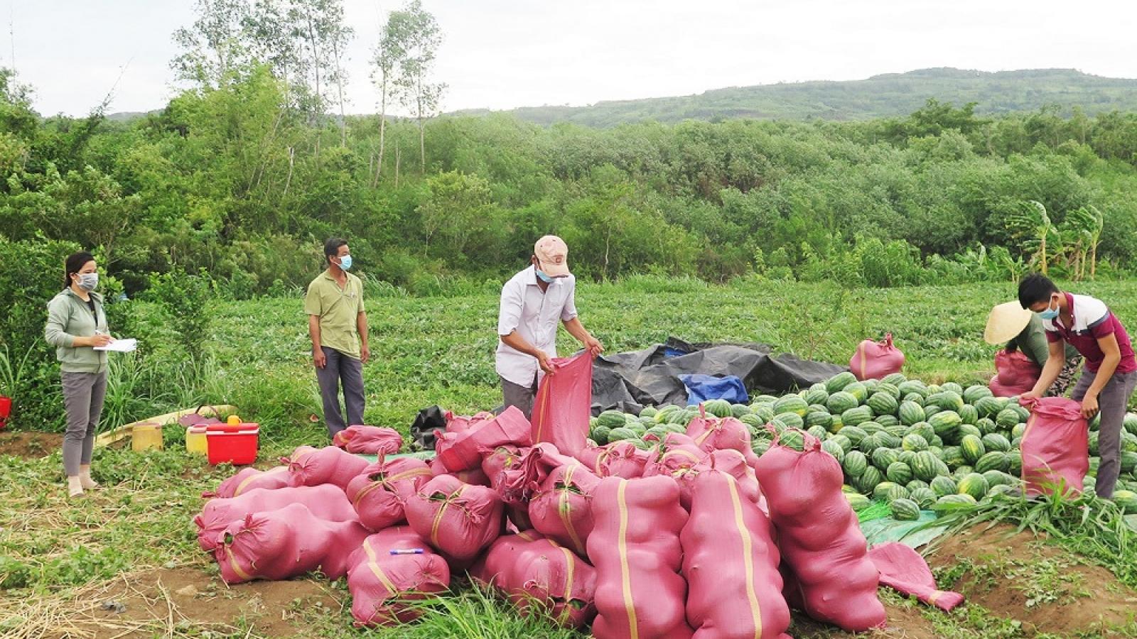 Phú Yên kết nối giúp nông dân tiêu thụ nông sản do ảnh hưởng của dịch Covid-19