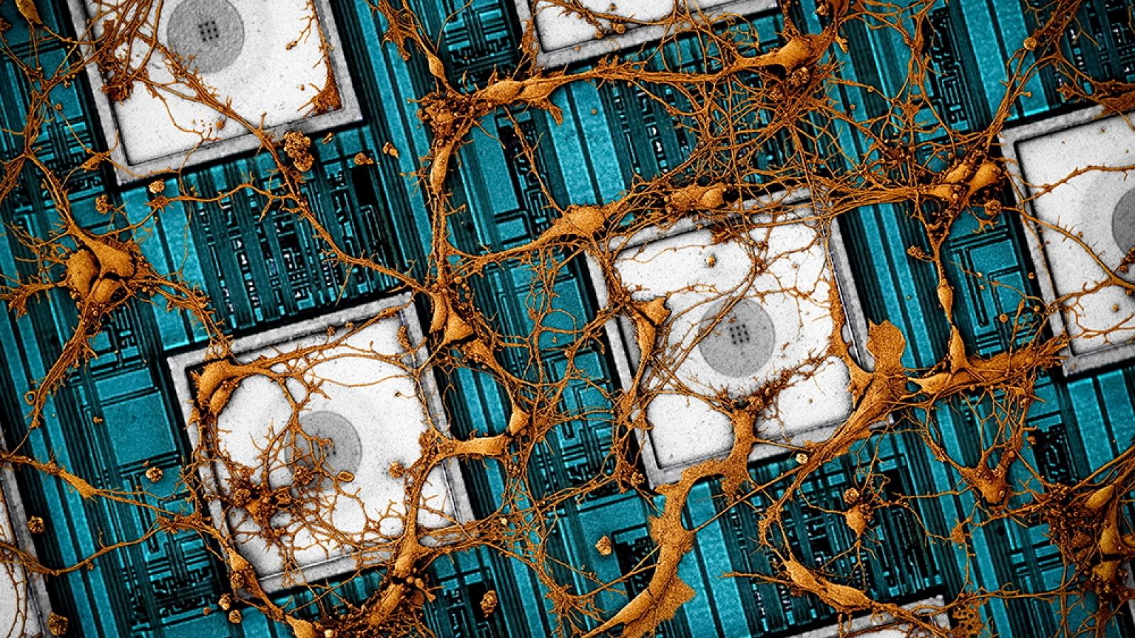 Samsung muốn sao chép não người vào chip nhớ