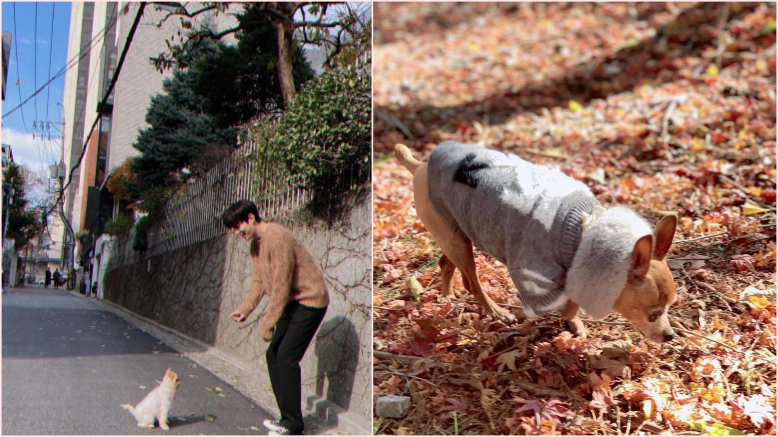 Son Ye Jin, Lee Min Ho gây chú ý với loạt ảnh thú cưng trên Instagram