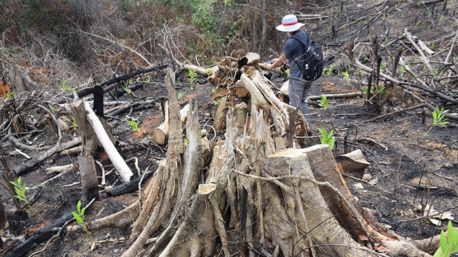 Khởi tố, bắt tạm giam 2 bị can vụ phá rừng phòng hộ huyện Sơn Hòa (Phú Yên)