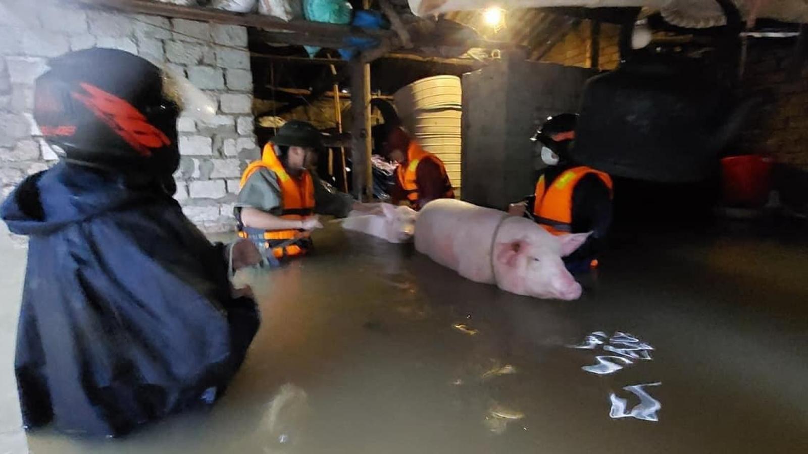 Nghệ An di dời dân khẩn cấp khi có gần 700 nhà dân bị ngập do mưa lũ