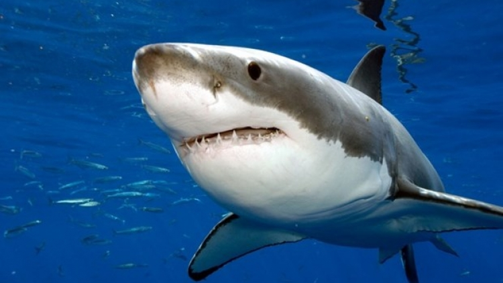 Colombia tịch thu gần 3.500 vây cá mập vận chuyển trái phép