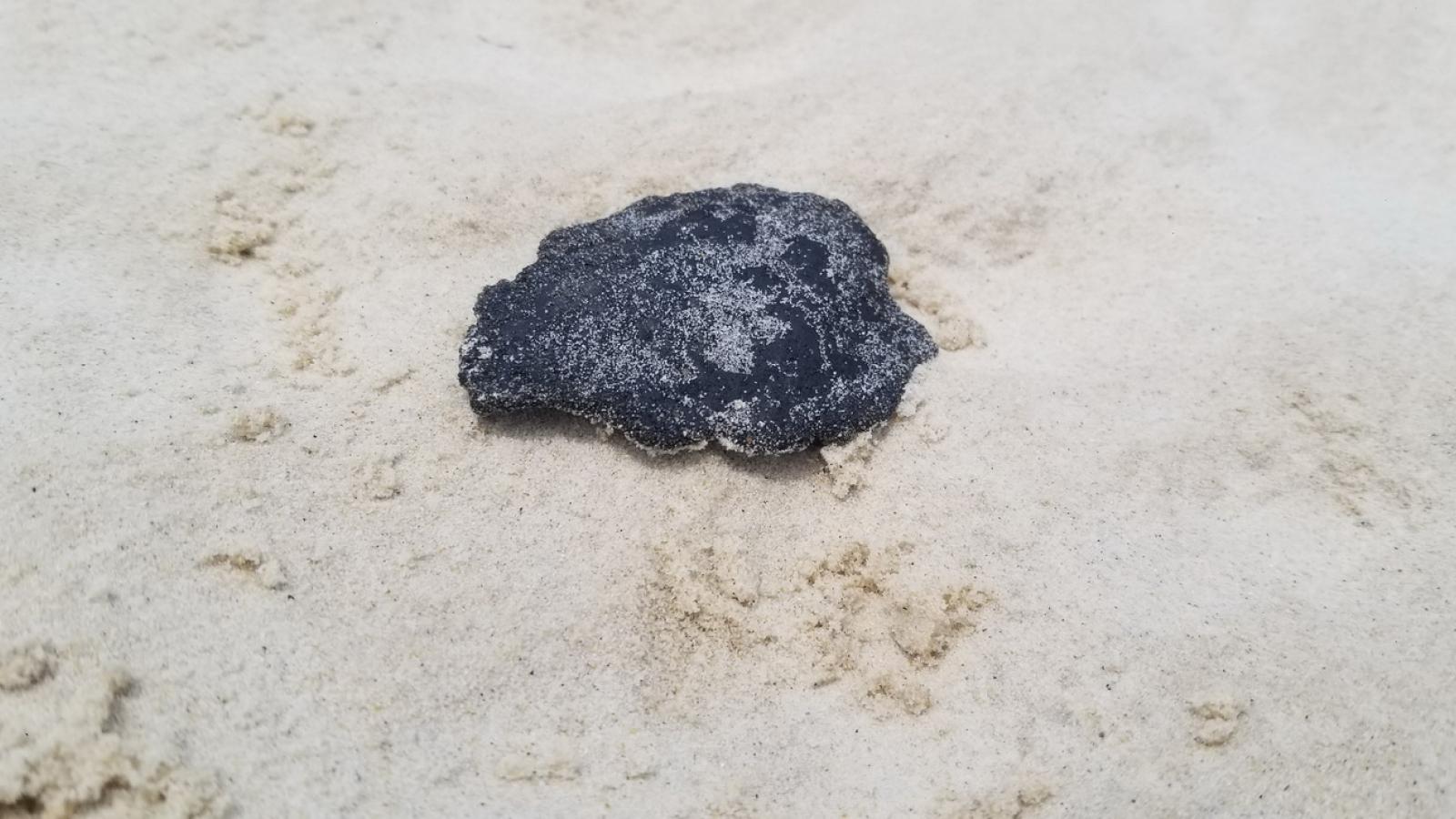 Dầu vón cục xuất hiện tại bờ biển Quảng Trị