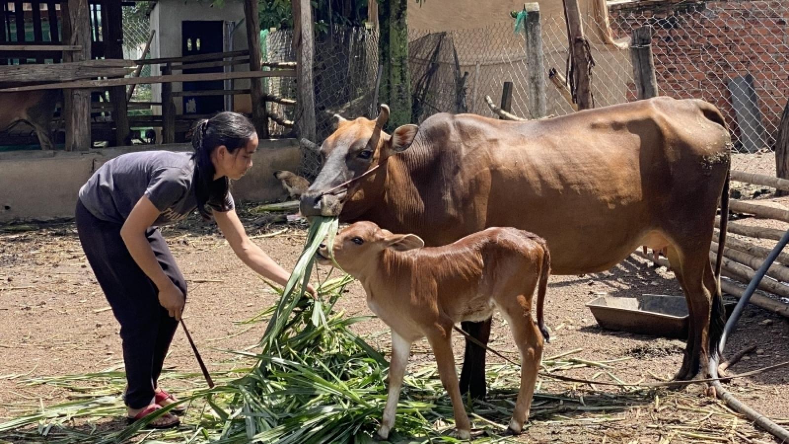 """Nguồn vốn tín chấp – """"Bà đỡ"""" giúp từng bước xoá đói giảm nghèo ở Đắk Lắk"""