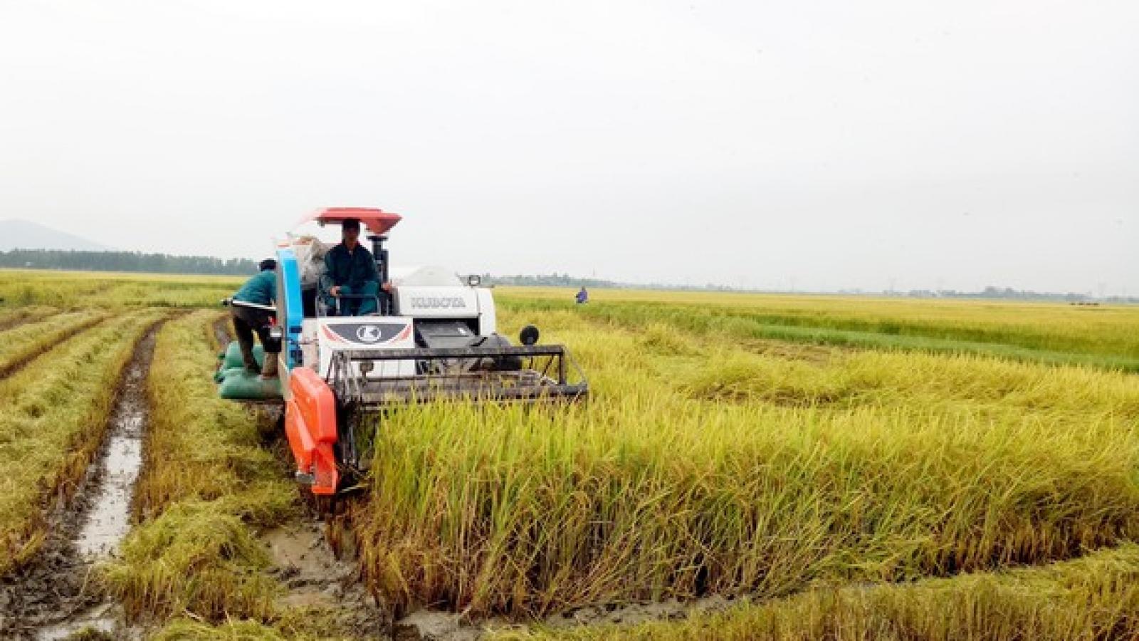 Nghệ An khẩn trương thu hoạch vụ mùa tránh thiệt hại do bão