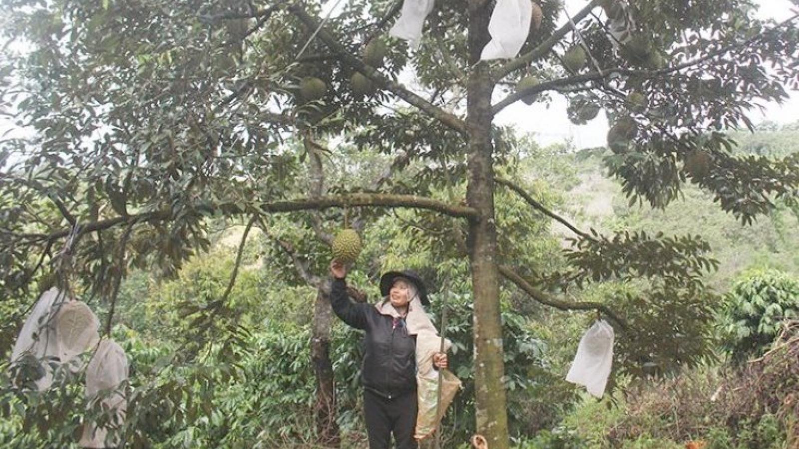 Hơn 11.000 tấn nông sản của Đắk Nông đã được hỗ trợ kết nối tiêu thụ