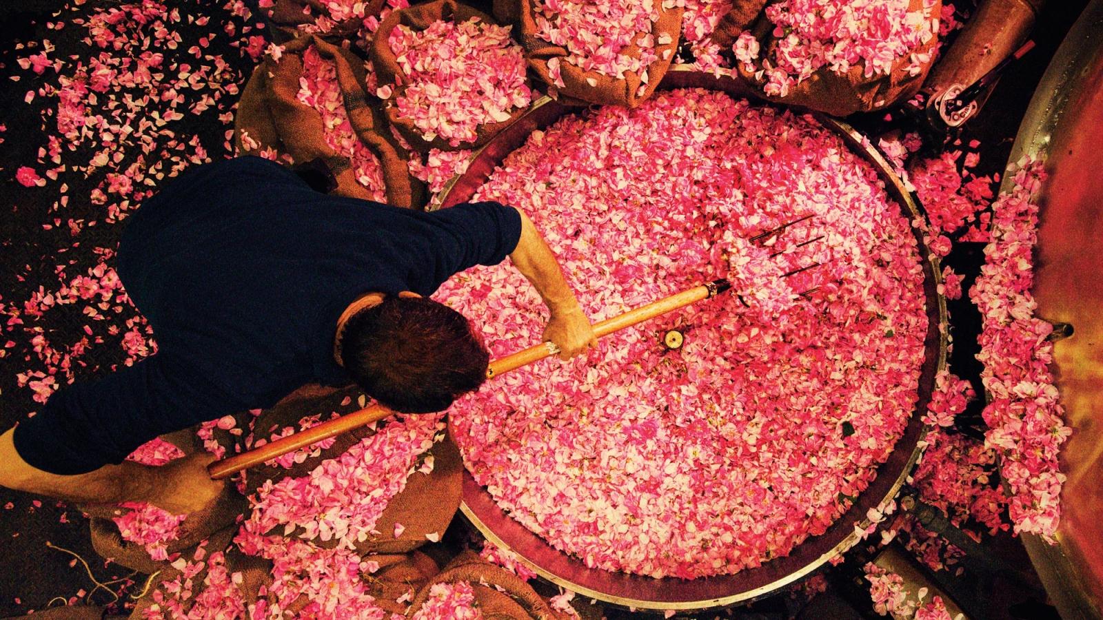Bí mật loại nguyên liệu làm nên nước hoa lừng danh Chanel No.5