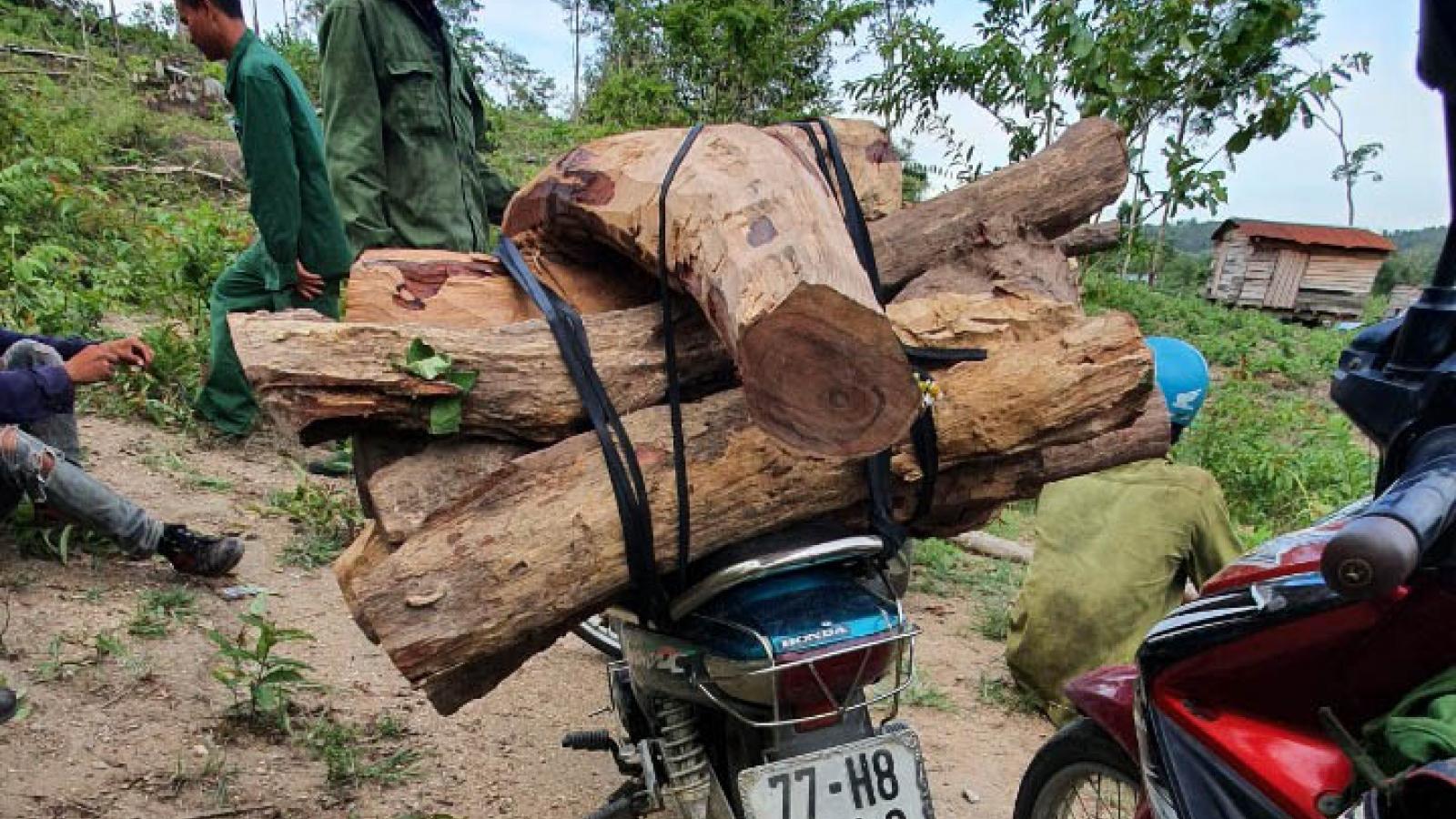 Phá rừng bảo tồn Ea Sô: Cần điều tra đầu nậu, cắt cung - cầu gỗ lậu
