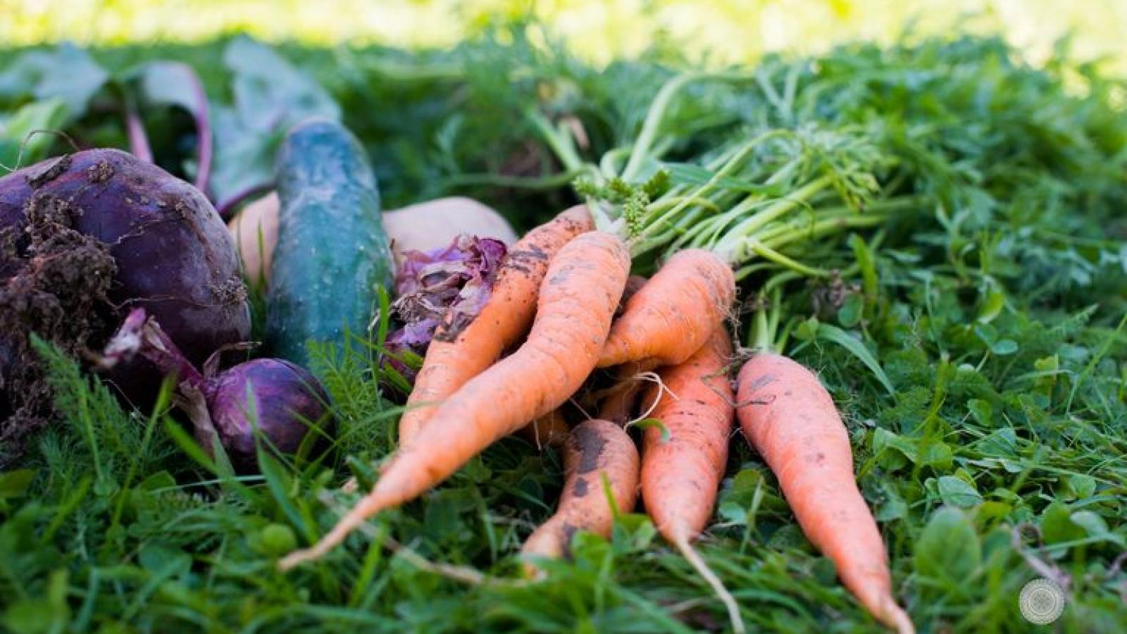 Mùa thu, thời điểm tuyệt vời trồng những loại rau củ trong vườn