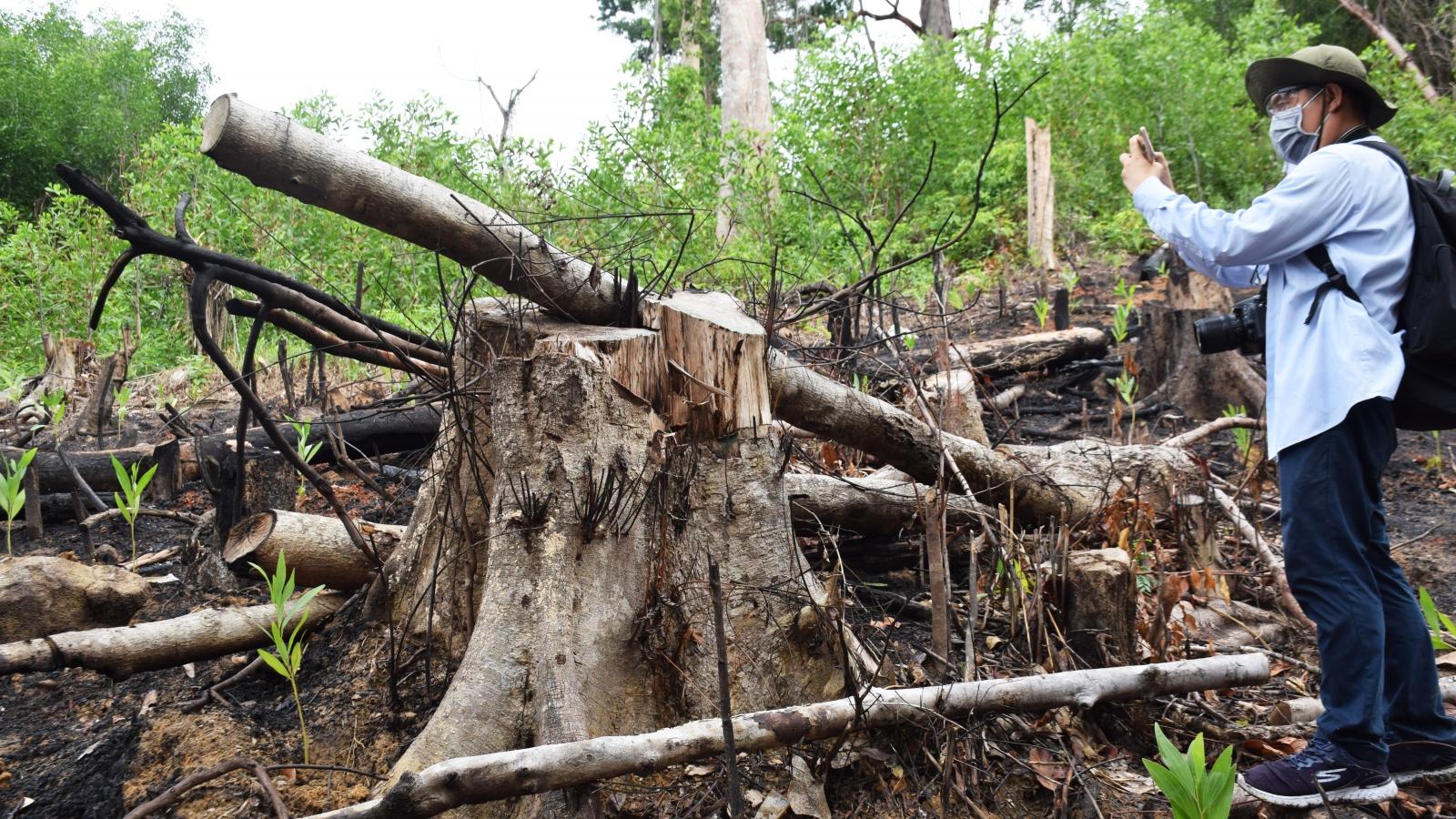 Phú Yên tạm đình chỉ công tác 15 ngày đối với PGĐ Ban Quản lý rừng phòng hộ Sơn Hòa