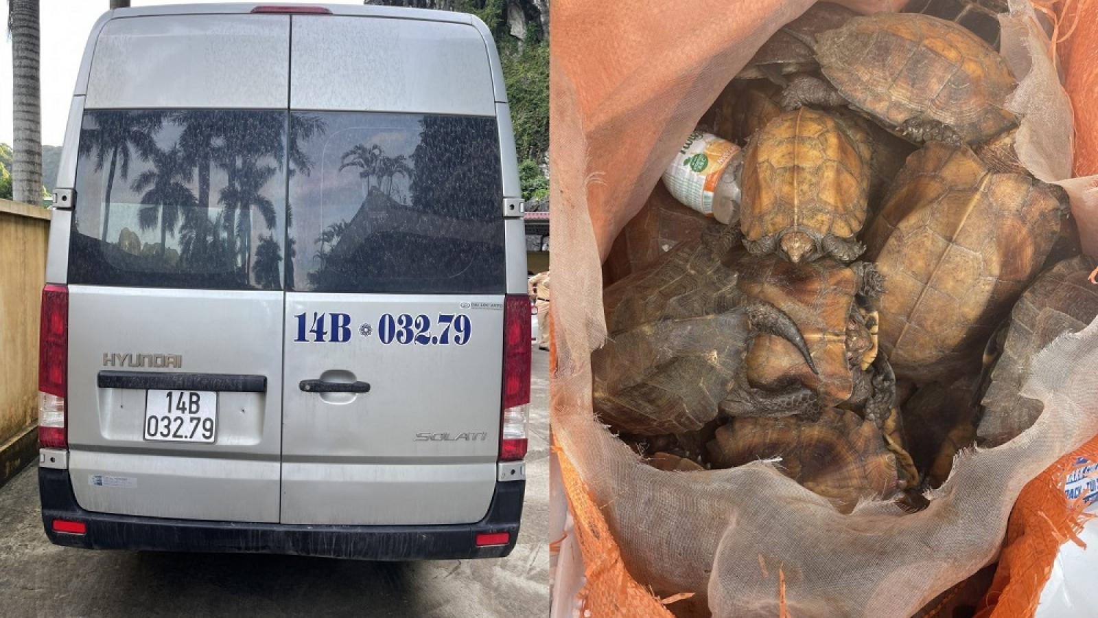 Quảng Ninh: Xe khách vận chuyển trái phép 34 con rùa quý hiếm