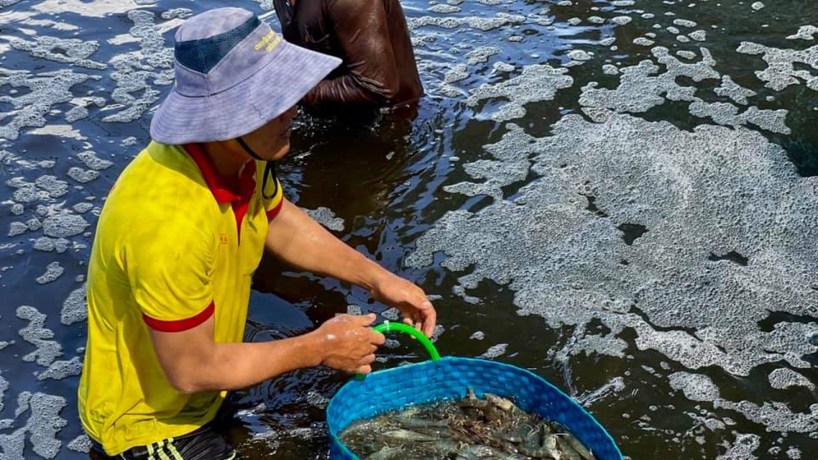 Mô hình nuôi tôm công nghệ cao vẫn có lãi trong mùa dịch