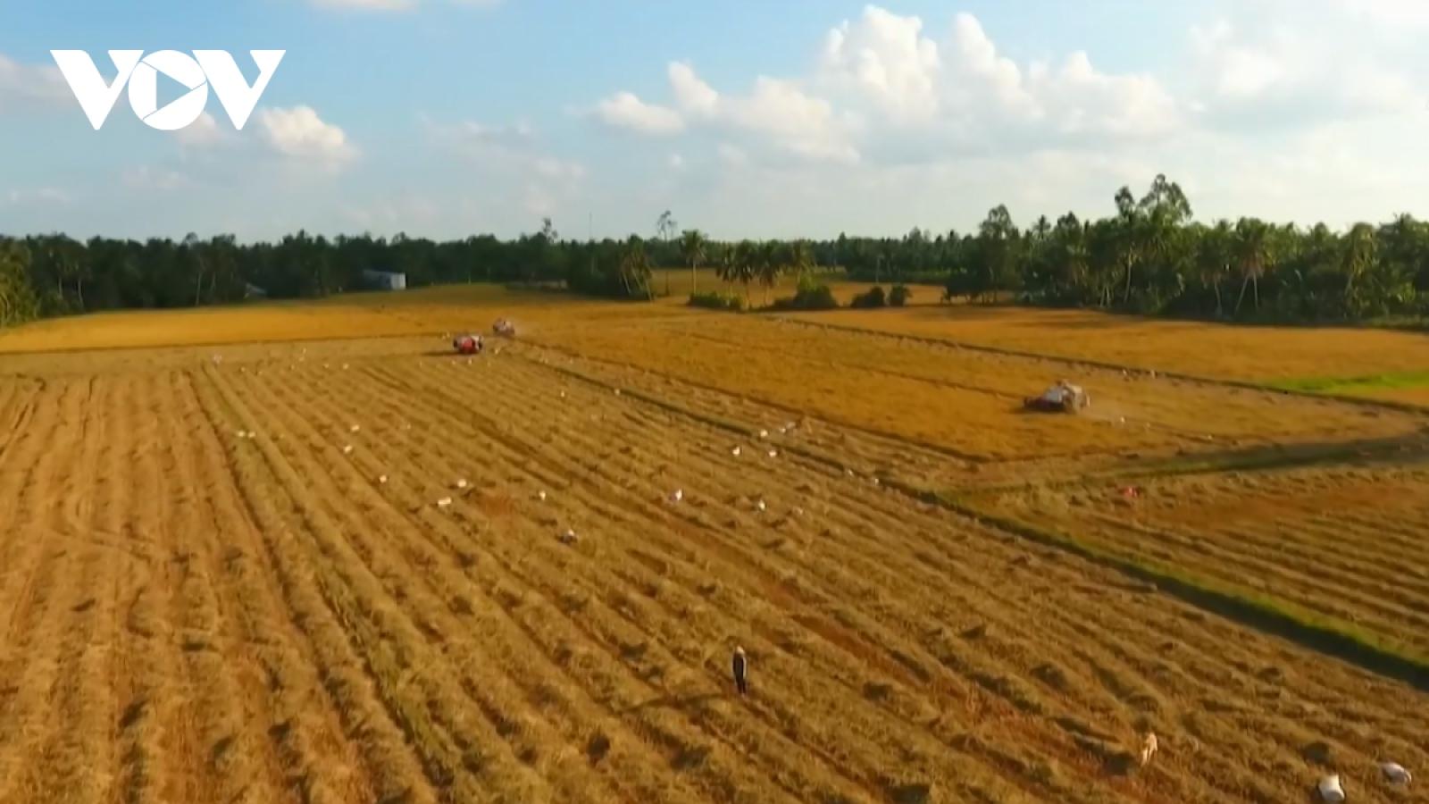 Đề xuất hỗ trợ lúa giống cho nông dân ĐBSCL sản xuất vụ Đông xuân 2021-2022