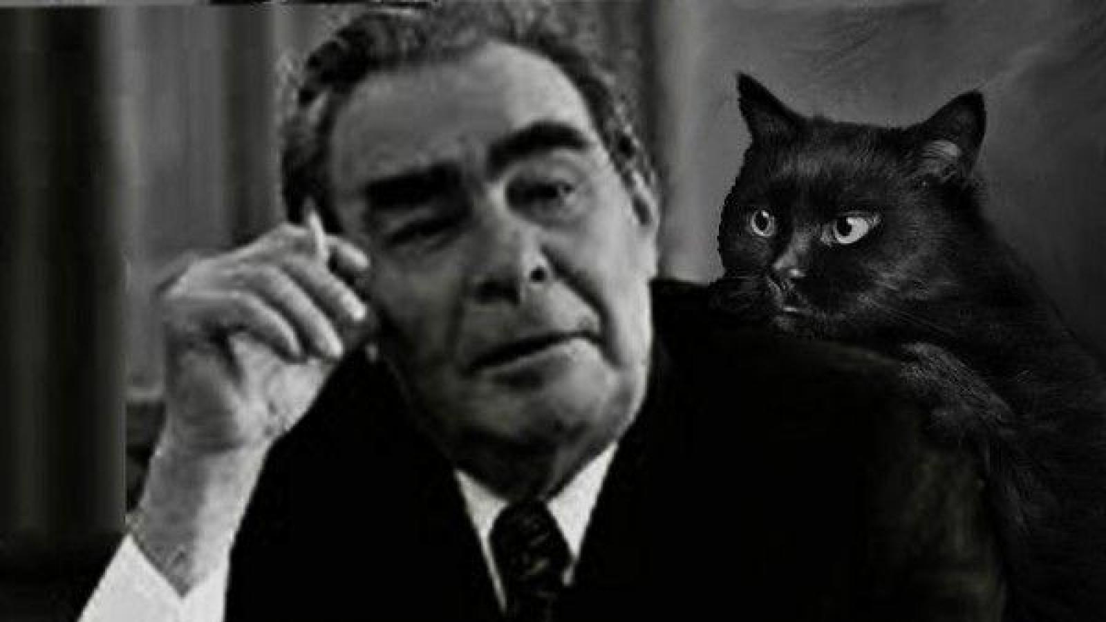 Con mèo do Đức Đạt Lai Lạt Ma tặng đã nhiều lần cứu mạng nhà lãnh đạo Brezhnev