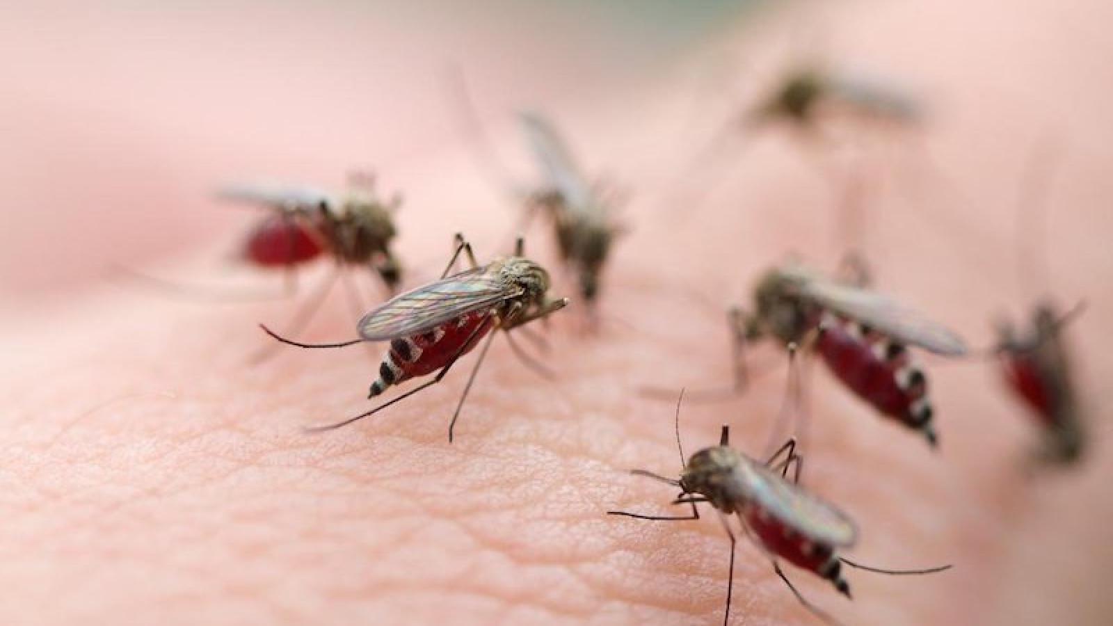 Dengue fever cases on the rise in Hanoi