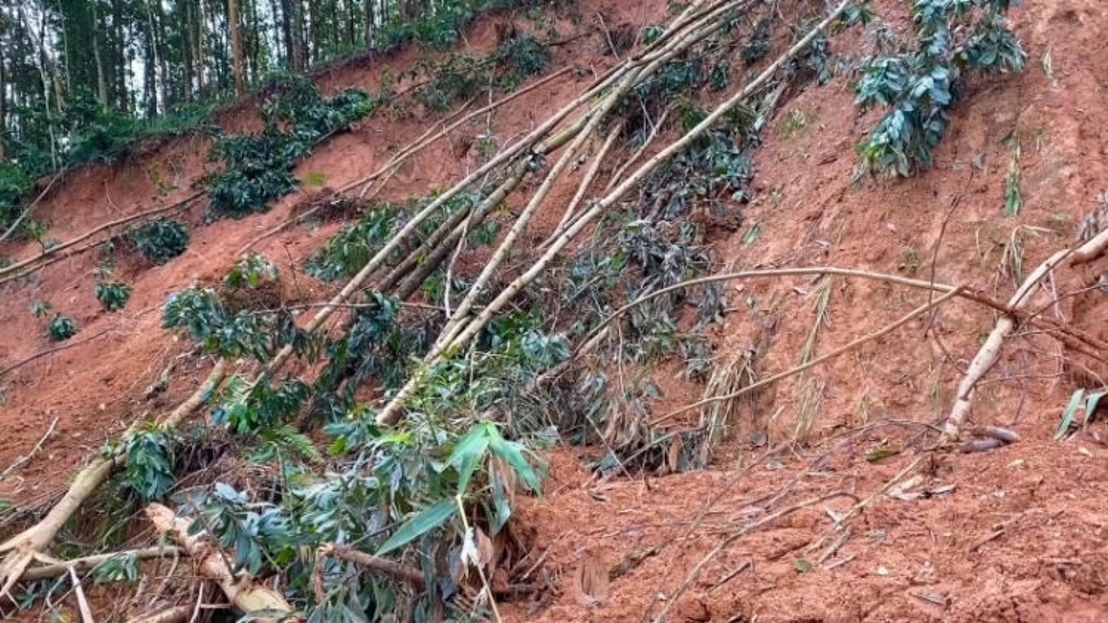 Trồng rừng gỗ lớn, hướng đi bền vững