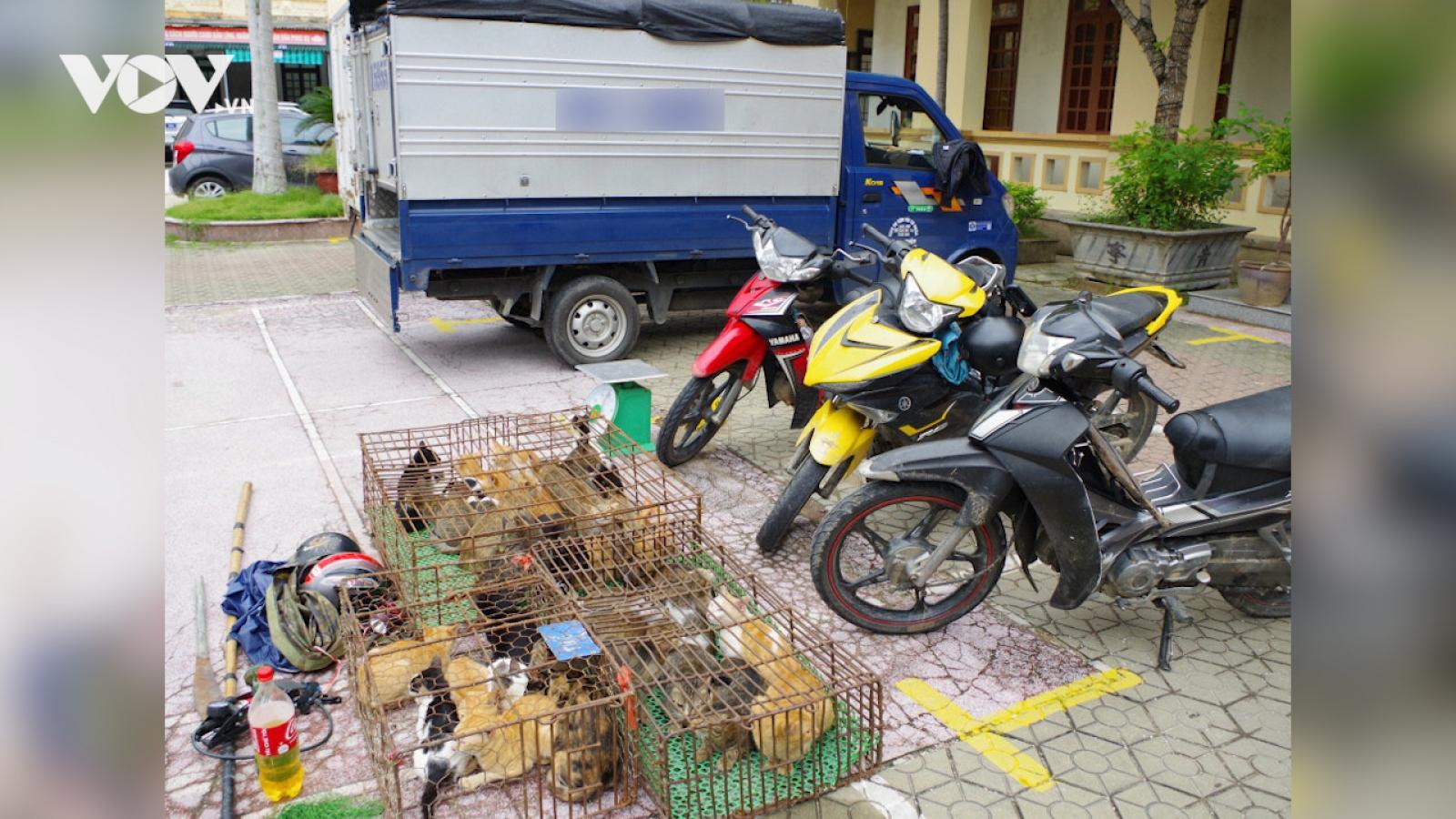 Nóng 24h: Mua ô tô tải để…. đi trộm mèo!