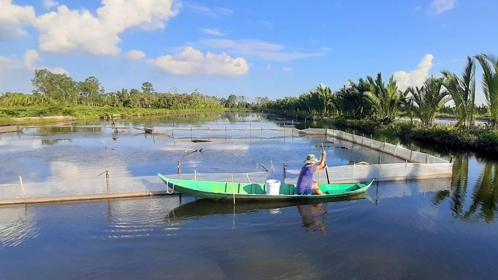 Người dân Cà Mau chủ động phục hồi, khôi phụcsản xuất