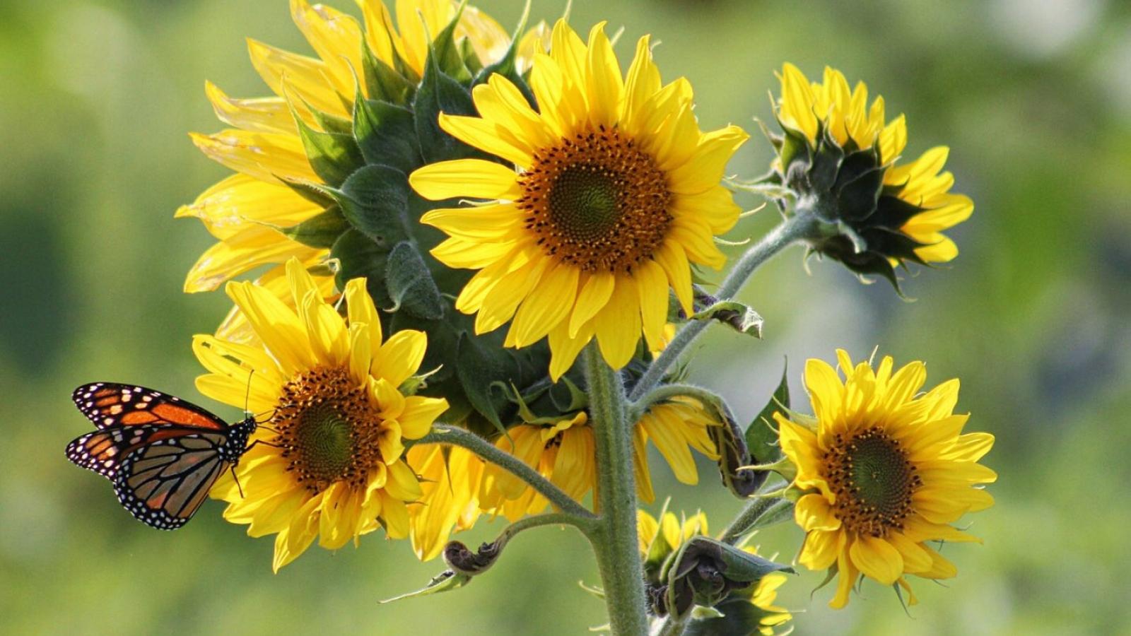 Khám phá 9 loại hoa tốt cho vườn rau nhà bạn