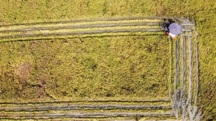 Vietnam ready to work with FAO towards sustainable food systems: official