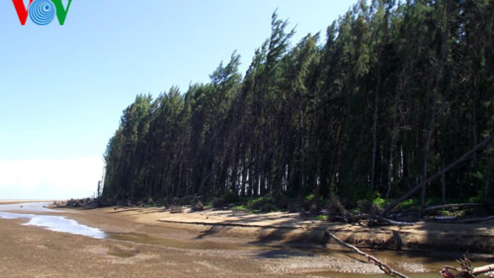 Phê duyệt đề án Bảo vệ và phát triển rừng vùng ven biển nhằm ứng phó với biến đổi khí hậu