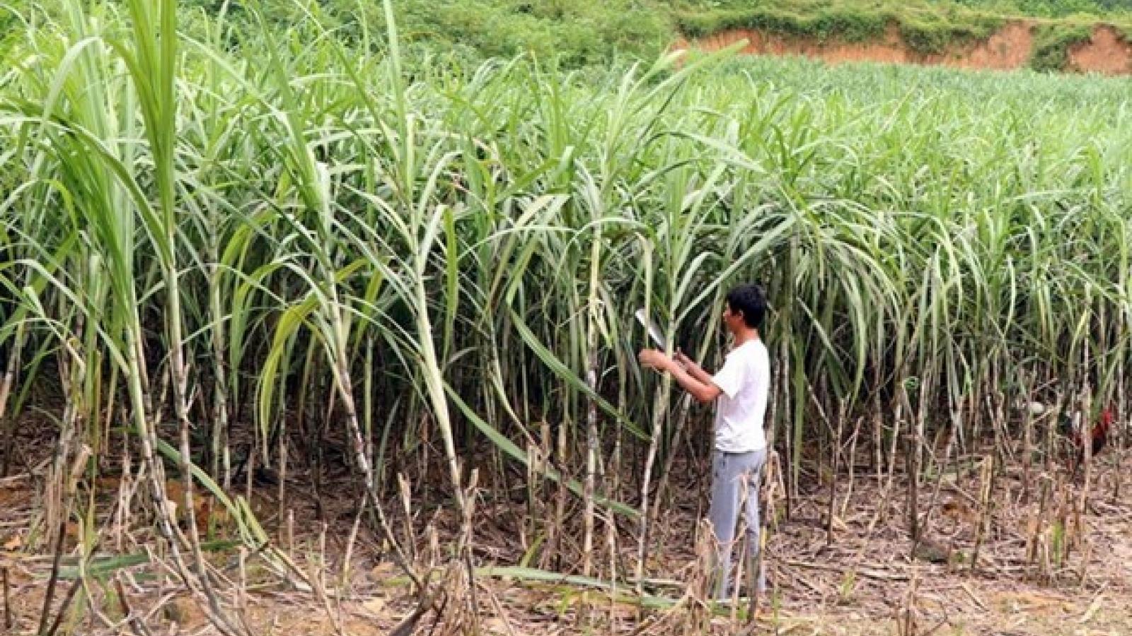 Vietnam remains Laos's largest sugar importer