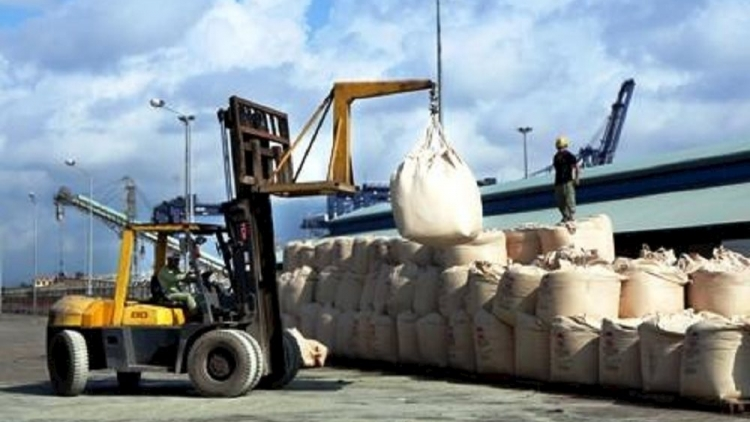 Cement exports record surge amid decline in domestic consumption