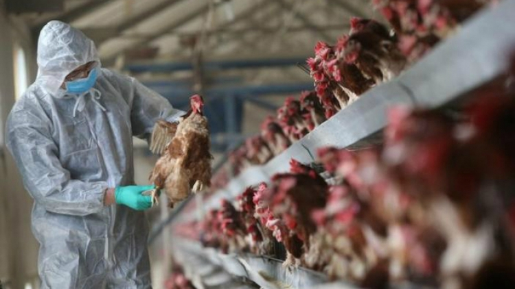 Vietnam wary as China grapples with deadly bird flu outbreak