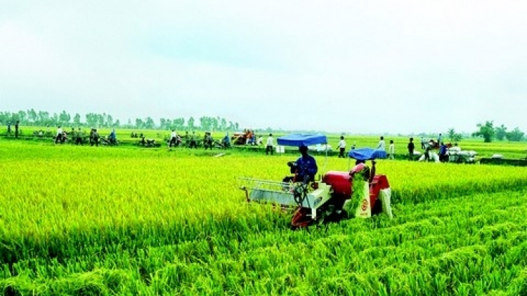 ANZ: Agriculture may slow Vietnam's economic growth