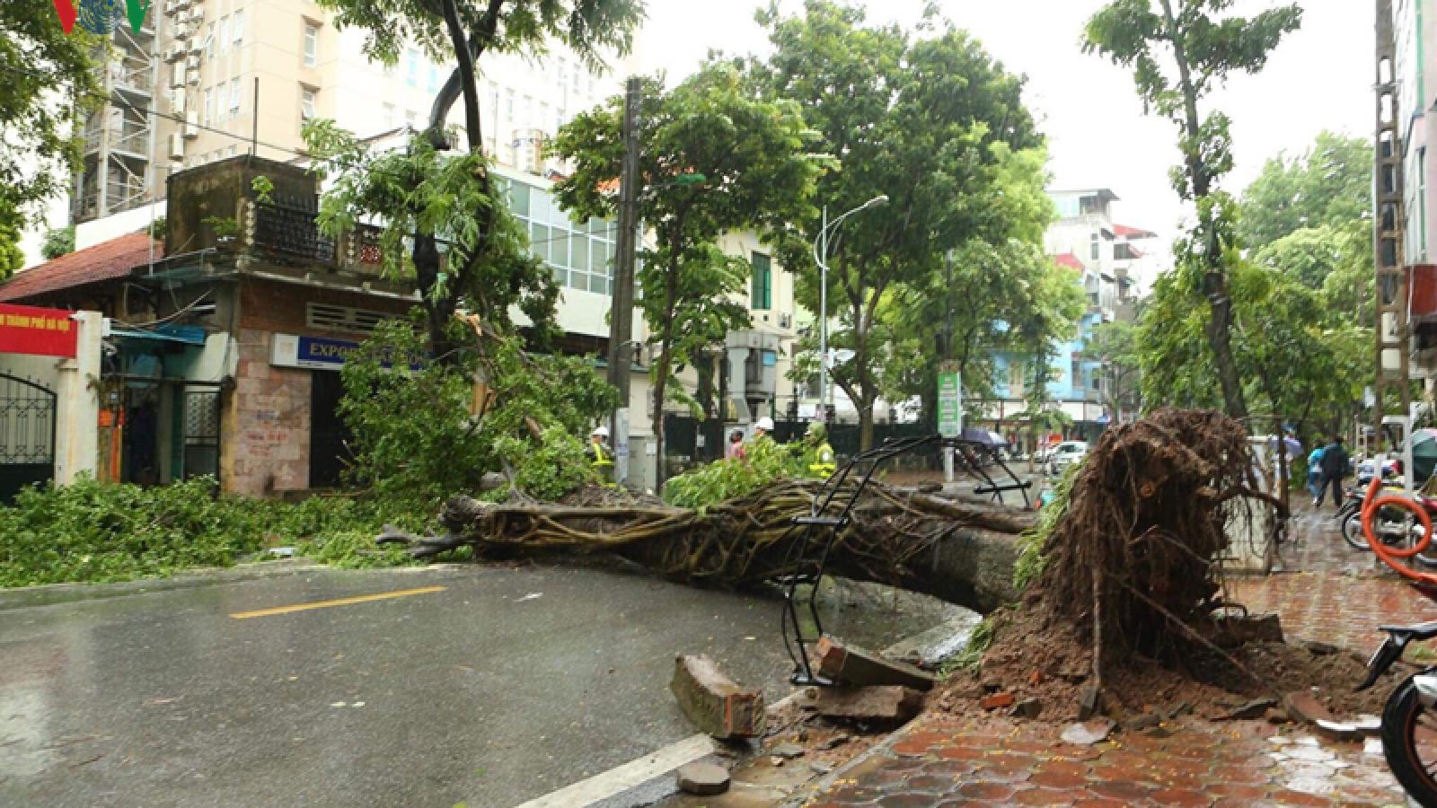 Trees across Hanoi devastated by tropical storm